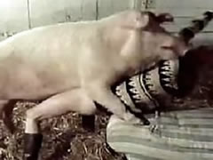 Taboo group sex with a pig